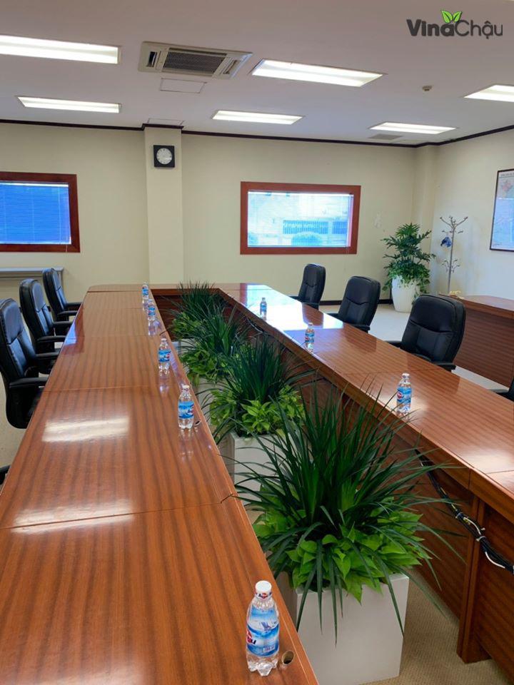 Trồng cây xanh văn phòng