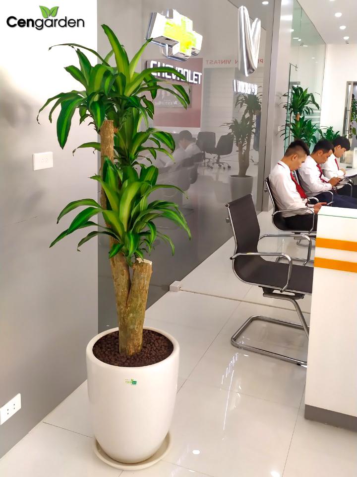 Văn phòng làm việc được bố trí cây xanh