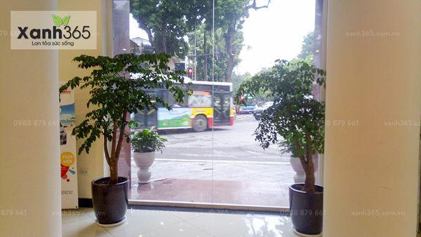 Cây cảnh của xanh 365 được đặt tại hai bên cửa xí nghiệp Toyota