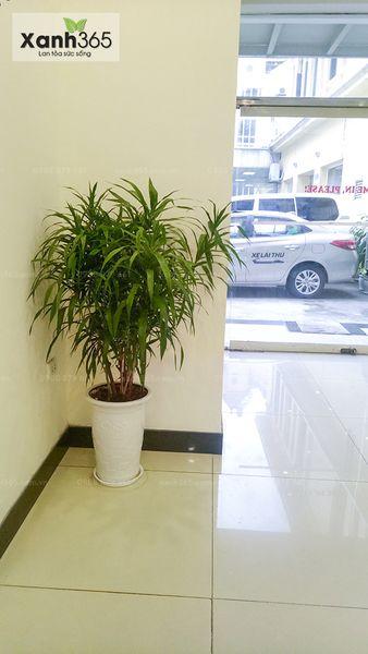 Toyota Hoàn Kiếm thuê cây tại Xanh 365