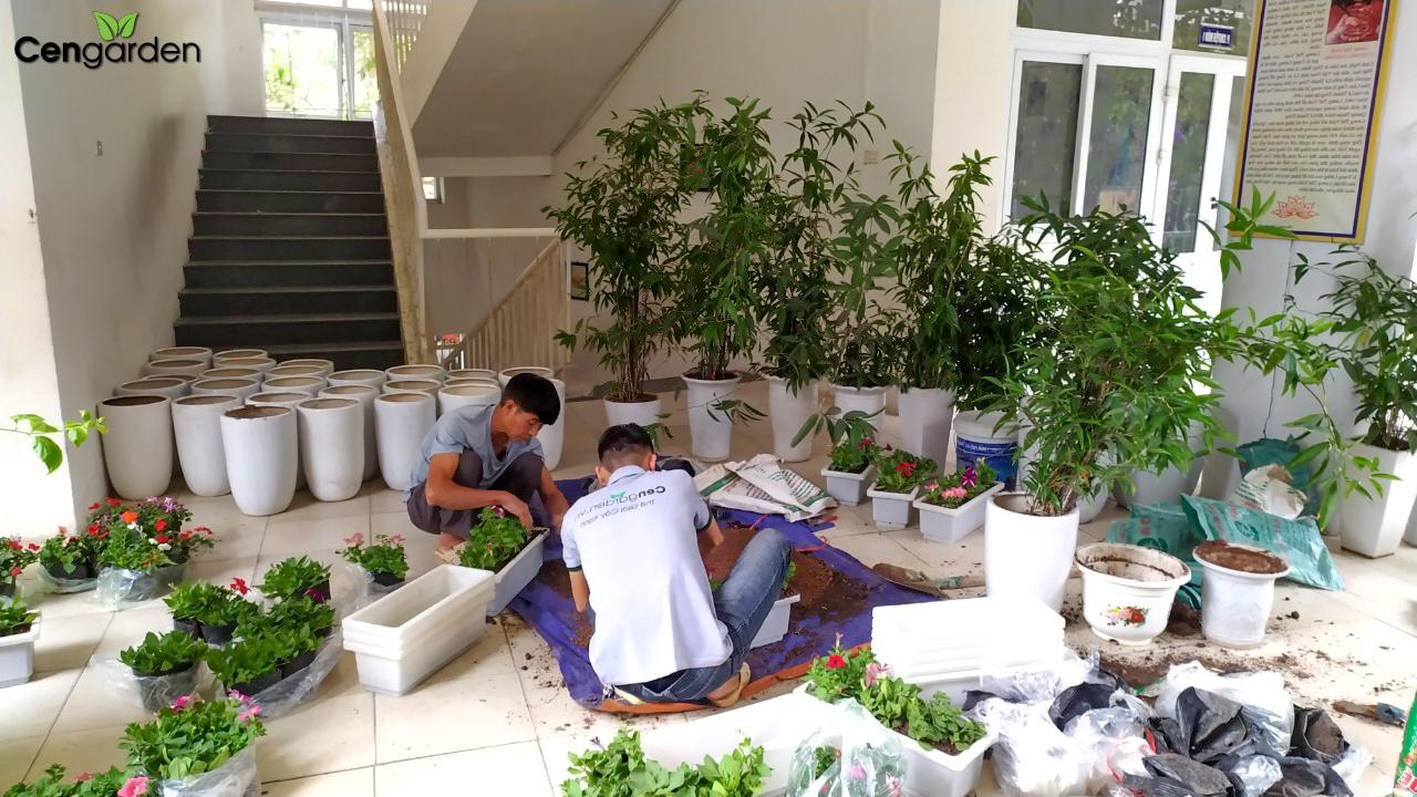 Xanh 365 trồng cây cải tạo khuôn viên