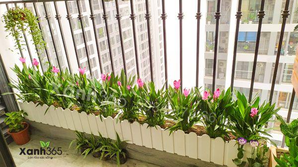 Hoa trồng trong chậu hàng rào cho ban công