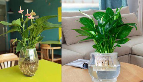Các loại cây được trồng bằng phương pháp thủy sinh đang được ưa chuộng