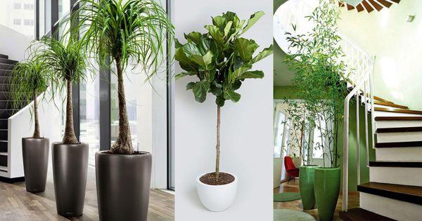 Nên chọn những loại cây văn phòng hợp phong thủy