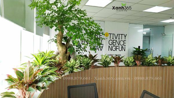 cây cảnh văn phòng- bộ máy lọc không khí tuyệt vời