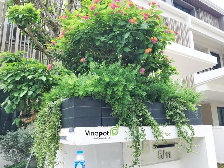 Chậu gỗ nhựa kẻ chỉ Vinapot